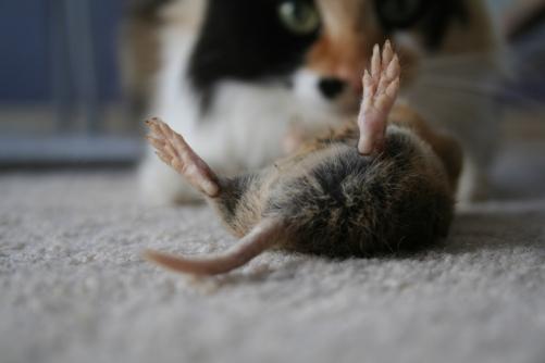 Eau de deceased rodent