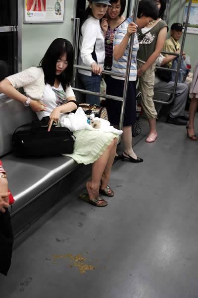 Korean Dog Poop Girl